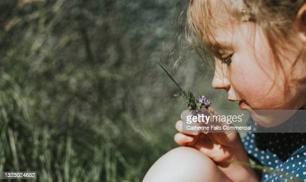 little girl picks a purple flower and examines it closely - garden stock pictures, royalty-free photos & images