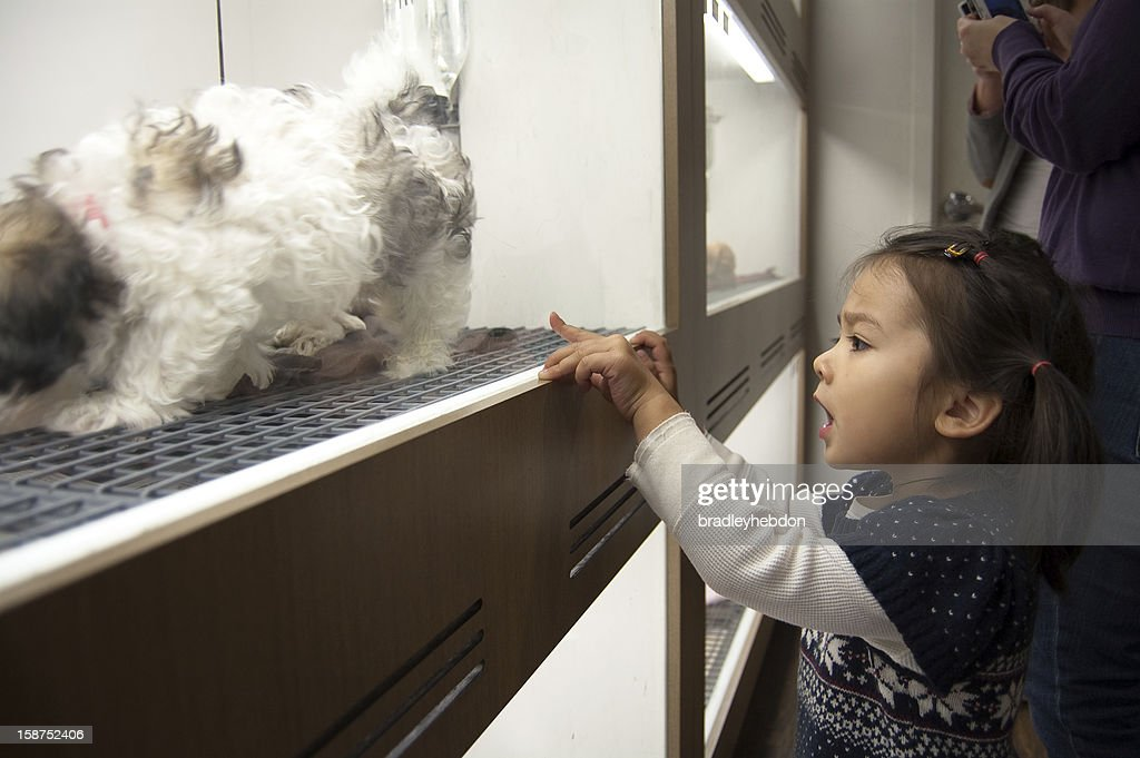 Little girl picks a Shih Tzu puppy at pet shop