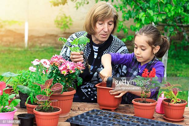 Little girl plant flowers in pot with her grandmother