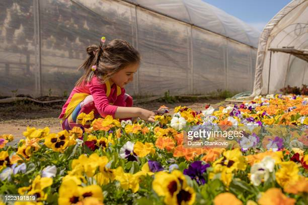 little girl playing with flowers in the garden - dusan stankovic stock pictures, royalty-free photos & images