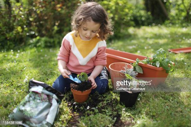 a little girl potting plants in the garden - horticulture stock pictures, royalty-free photos & images