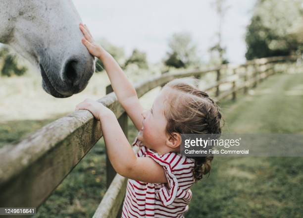 little girl reaching up to pat a white horse on the nose - equestrian event stock pictures, royalty-free photos & images