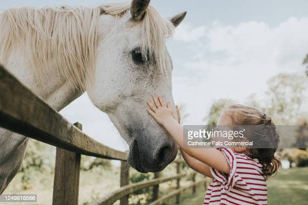 little girl reaching up to stroke her horse on the nose - animal stock pictures, royalty-free photos & images