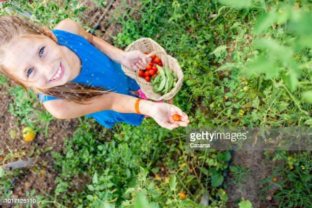 Little girl showing harvested cherry tomato