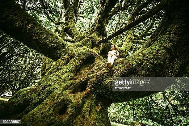 little girl sitting on centennial tree - 100th anniversary stock photos and pictures