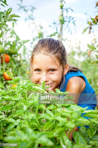 Little girl smelling basil in the vegetable garden