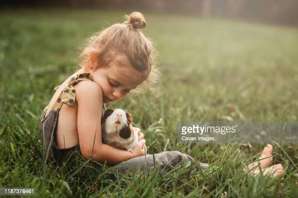 little girl snuggling her pet guinea pig in the grass - guinea pig stock pictures, royalty-free photos & images