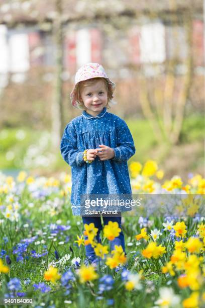 little girl standing in a flowery meadow of daffodils, lake constance, germany - narcissus mythological character stock photos and pictures
