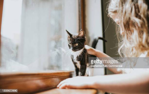 little girl strokes a black and white kitten who stands on a windowsill and enjoys the attention. - animal body part stock pictures, royalty-free photos & images