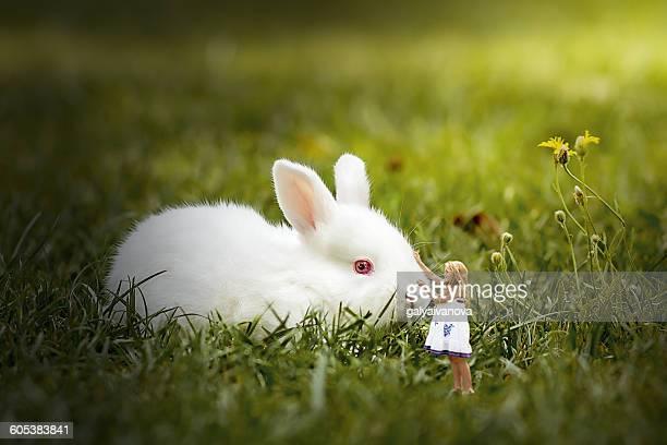 Little girl stroking big rabbit