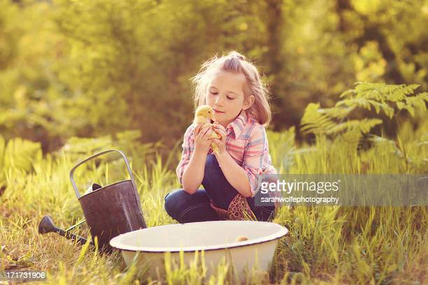 little girl taking care of ducklings - たらい ストックフォトと画像