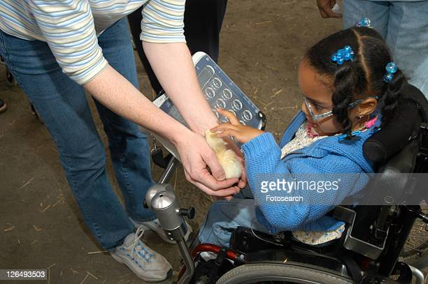 little girl, utilizing a wheelchair for mobility and a augmentative communication device for communication, holding a baby chick at a petting zoo - cerebrum stock photos and pictures