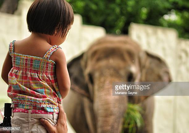 A little girl watching an elephant