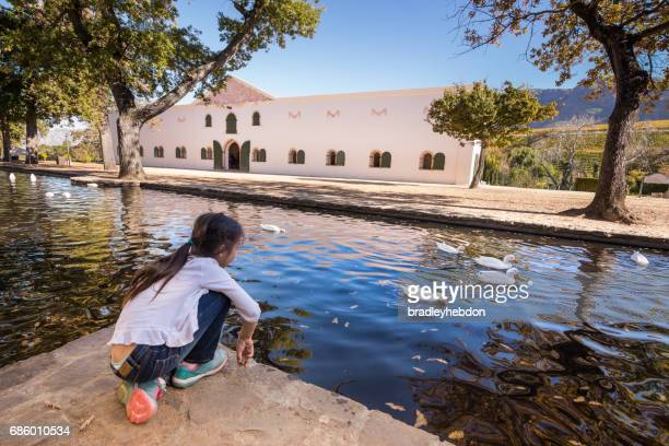 little girl watching ducks at groot constantia wine farm - constantia stock pictures, royalty-free photos & images