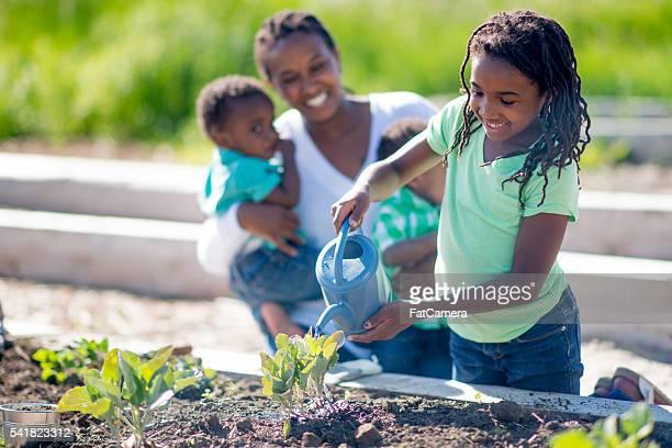 Little Girl Water the Vegetables
