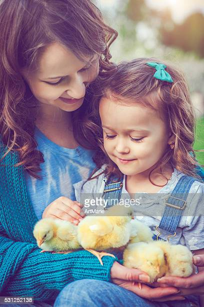 little girl with chickens - baby chicken stock photos and pictures