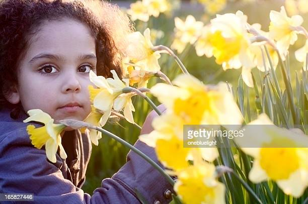 little girl with daffodil at sunset - field of daffodils stock pictures, royalty-free photos & images