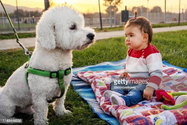 menina com cão do poodle - poodle - fotografias e filmes do acervo