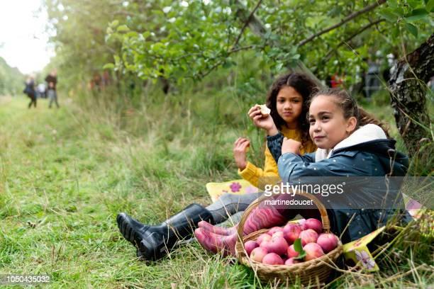 """kleine meisjes eten appelen in boomgaard. - """"martine doucet"""" or martinedoucet stockfoto's en -beelden"""
