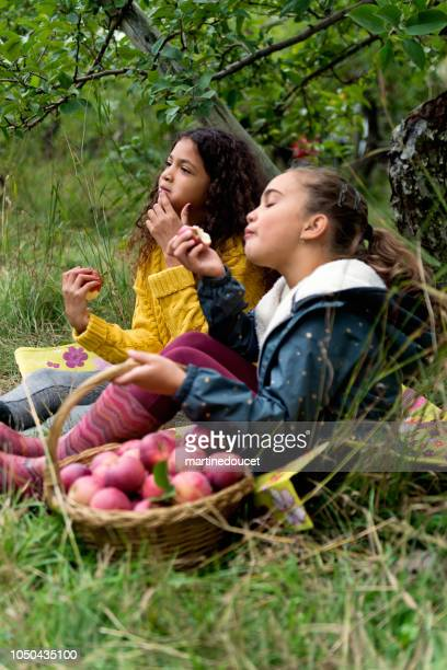 "little girls eating apples in orchard. - ""martine doucet"" or martinedoucet stock pictures, royalty-free photos & images"
