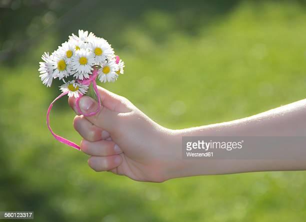 Little girls hand holding bunch of daisys