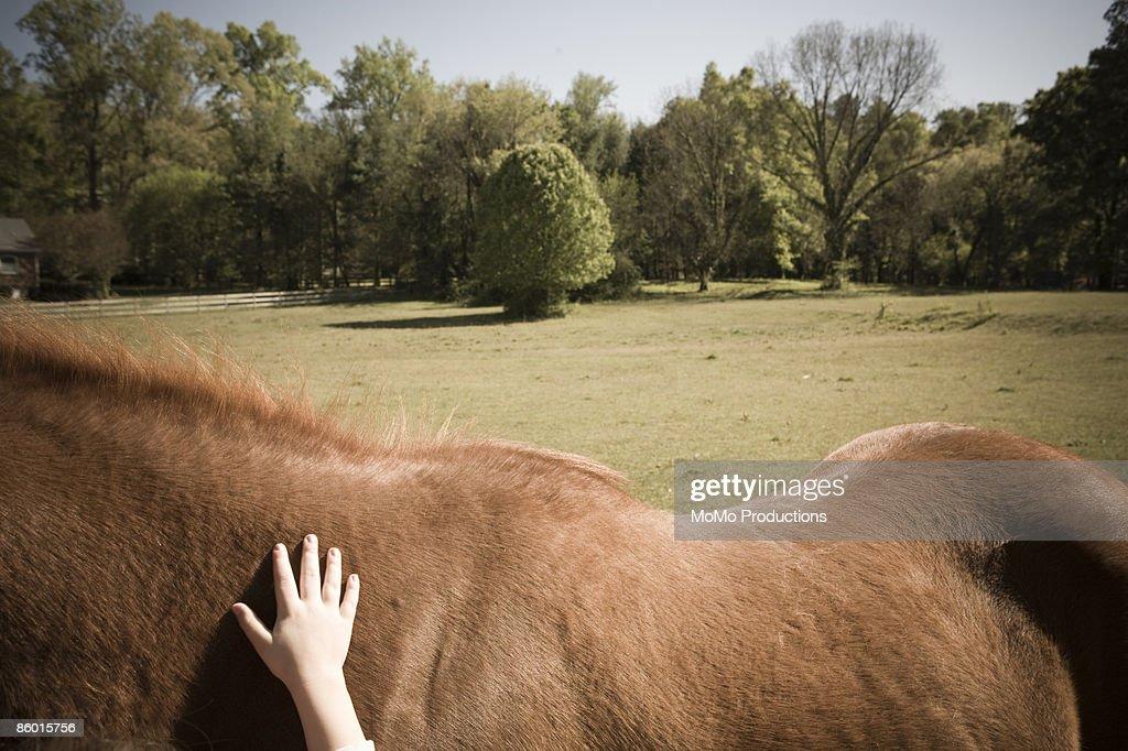 Little Girl's hand on horse's back  : Foto de stock