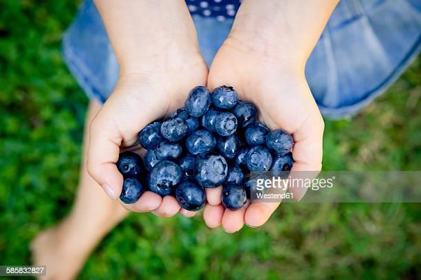 Little girls hands holding blueberries