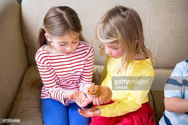 filles des caresses animal hamster - hamster photos et images de collection