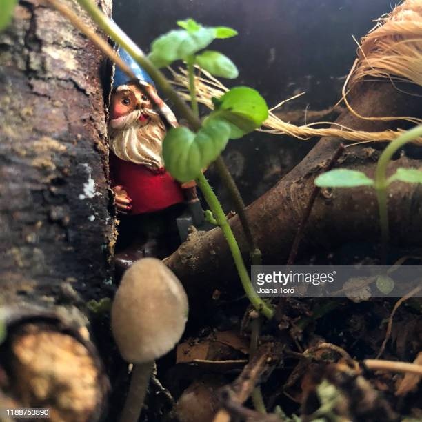 little goblins  -conceptual nature - joana toro stock pictures, royalty-free photos & images