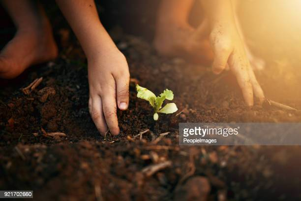 little green fingers - responsibility stock pictures, royalty-free photos & images
