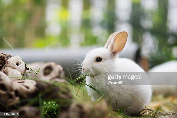 little hare in enclosure - hare stock photos and pictures