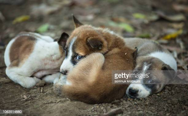 little homeless puppy - stray animal stock pictures, royalty-free photos & images
