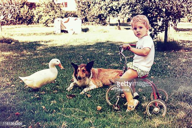 little kid on her tricycle with a dock and a dog - filmato d'archivio foto e immagini stock