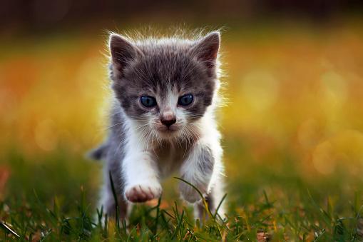 Little kitten is running 485902356