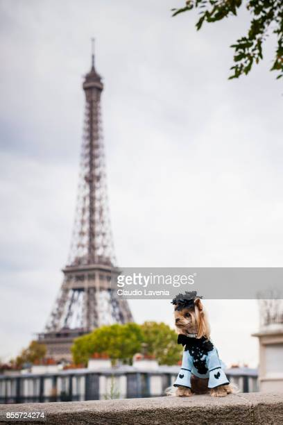 Little Lola Sunshine the dog is seen in front of the Eiffel Tower wears a dress inspired by Andrew GN after the Andrew GN show at the Palais de Tokyo...