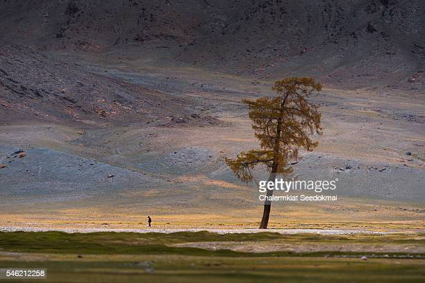 A little man with the big tree in Mongolia