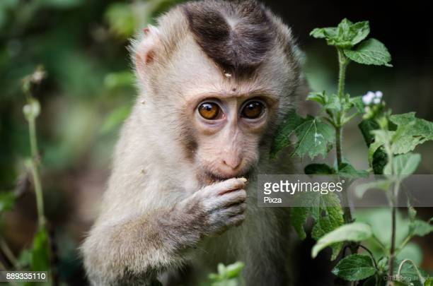 little monkey in the forest - primate stock pictures, royalty-free photos & images