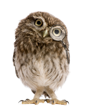 Little Owl wearing magnifying glass, 50 days old, standing. 119403108