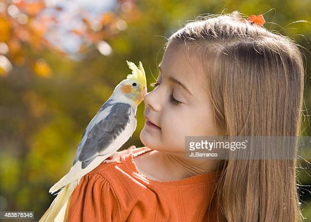 little peck on the cheek - cockatiel stock pictures, royalty-free photos & images