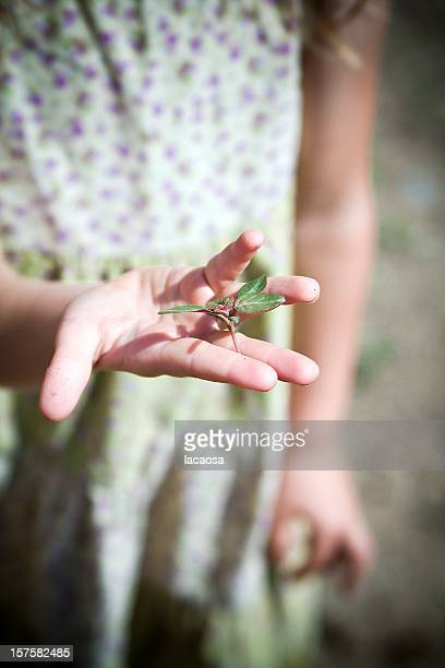 little plant in a little girls hand