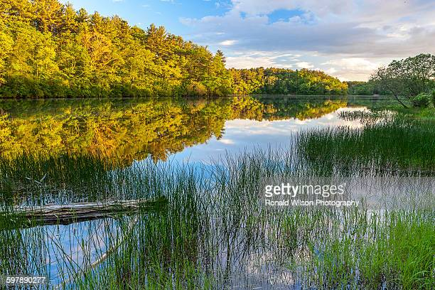 little pond, morton park - plymouth massachusetts stock photos and pictures