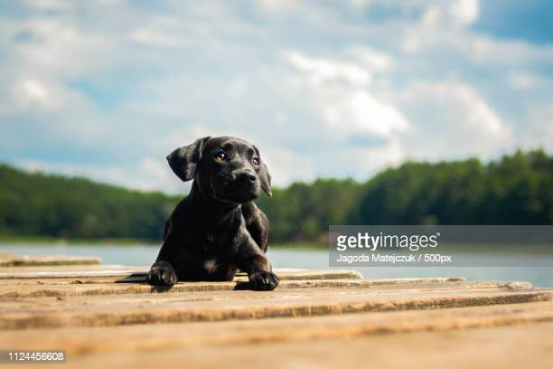 little puppy by the lake - terrier stock pictures, royalty-free photos & images