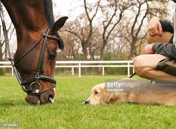 little puppy chum up with the big horse - funny horses stock pictures, royalty-free photos & images