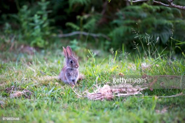little rabbit - um animal stockfoto's en -beelden