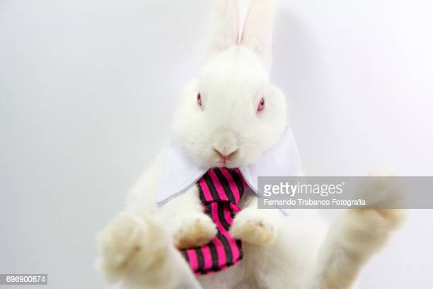 Little rabbit with an elegant necktie