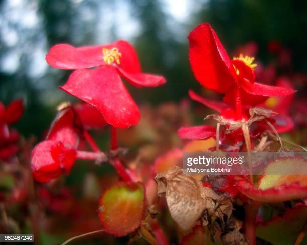 little red babes - gorgeous babes fotografías e imágenes de stock
