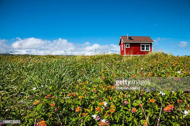 Little red house in green field