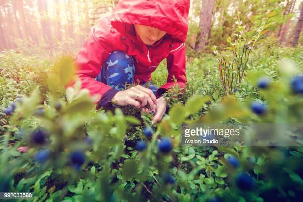 little red riding hood bessen plukken in het bos - bosbes stockfoto's en -beelden
