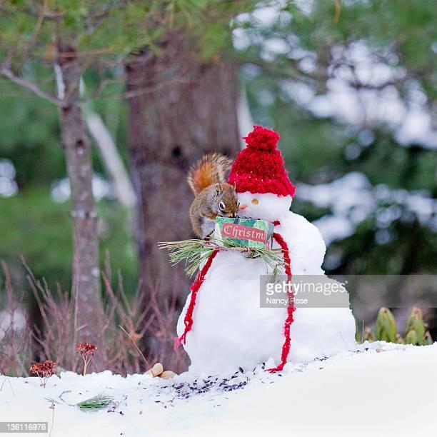 Little red squirrel standing on shoulder