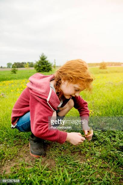 """little redhead girl looking for flowers and four-leaf clover. - """"martine doucet"""" or martinedoucet stock pictures, royalty-free photos & images"""